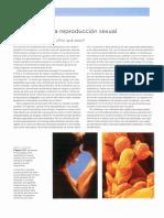 descripcion d ela meiosis (1).pdf