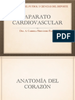 Anatomía Cardiovascular