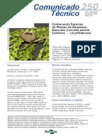 SAPUCAIA.COM250.pdf