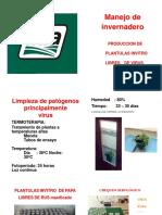 Manejo Invernadero Pinao 017
