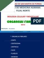 Fibrilares