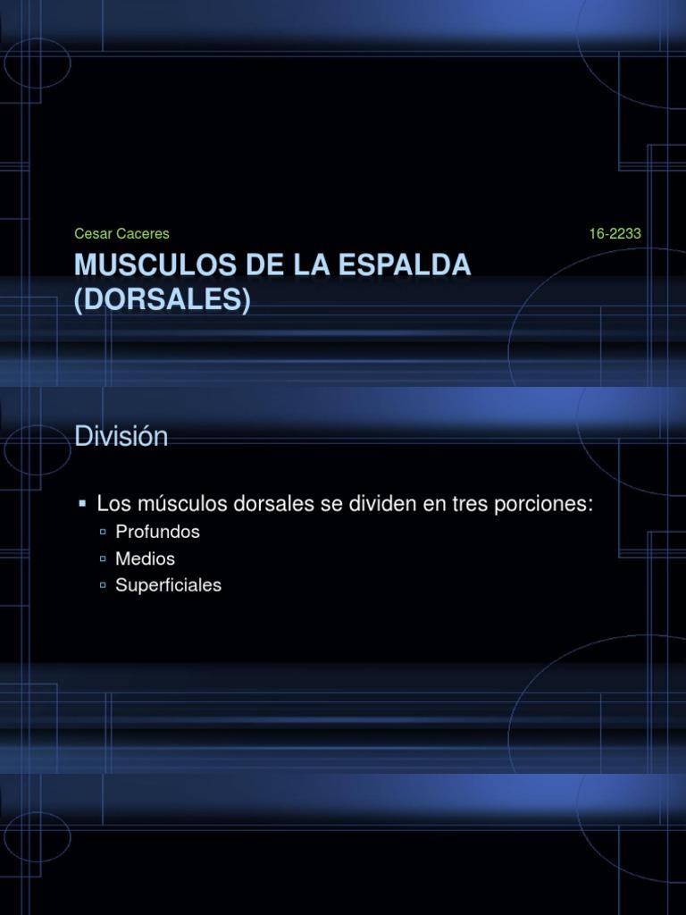 Musculos de La Espalda (Dorsales)
