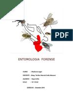 ENTOMOLOGIA-FORENSE