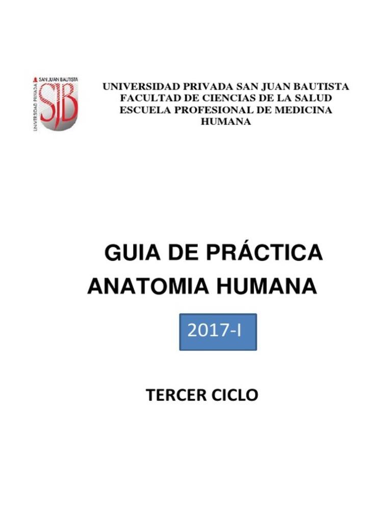Asombroso Prueba De La Práctica De Anatomía Adorno - Imágenes de ...