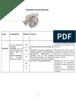 Sistema Nervioso Periferico Plexo Braquial