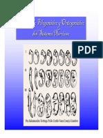 desarrollofilogenticoyontogenticodelsn-140417093018-phpapp02