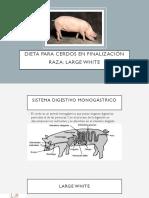 Dieta balanceada Cerdos