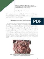 Características da minhoca Eisenia foetida - Benefícios e mais-valias ambientais