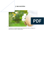 La Placenta y Sus Secretos