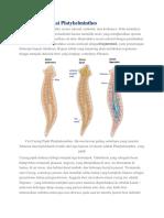 Cara Reproduksi Platyhelminthes