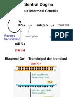 5. Gene Expression -Transcription
