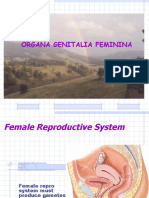 12 Genitalia Feminina