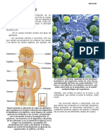 8. Sistema Endocrino