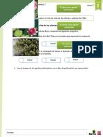 Refuerzo Ciclo de vida de las plantas y flora de Chile.doc