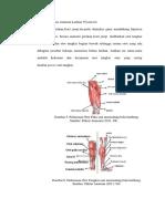 Tinjauan Secara Anatomi Latihan Plyometric