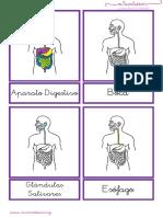aparato-digestivo-letra-ligada.pdf