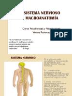 Sistema Nervioso Macro