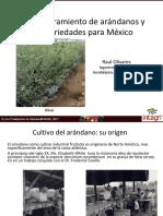 6. Mejoramiento de Arandanos y Variedades Para Mexico (Olivares)