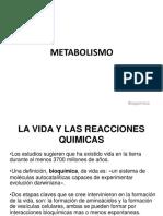 7. Bases Del Metbolismo. Pptx