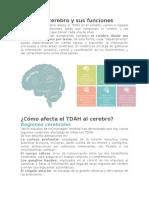 Áreas Del Cerebro TDAH