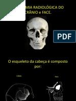 Anatomia Cranio