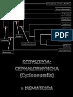 ecdysozoa-nematoida