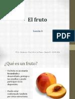Capítulo VI Fruto botanica