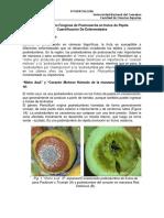 Complementos-Teoricos-Postcosecha-2017 (1).pdf