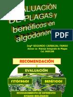 Algod-evaluación y Control de Plagas