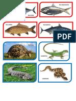 Peces, Aves y Reptiles