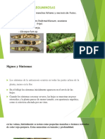Antracnosis en Leguminosas (Diapositivas)