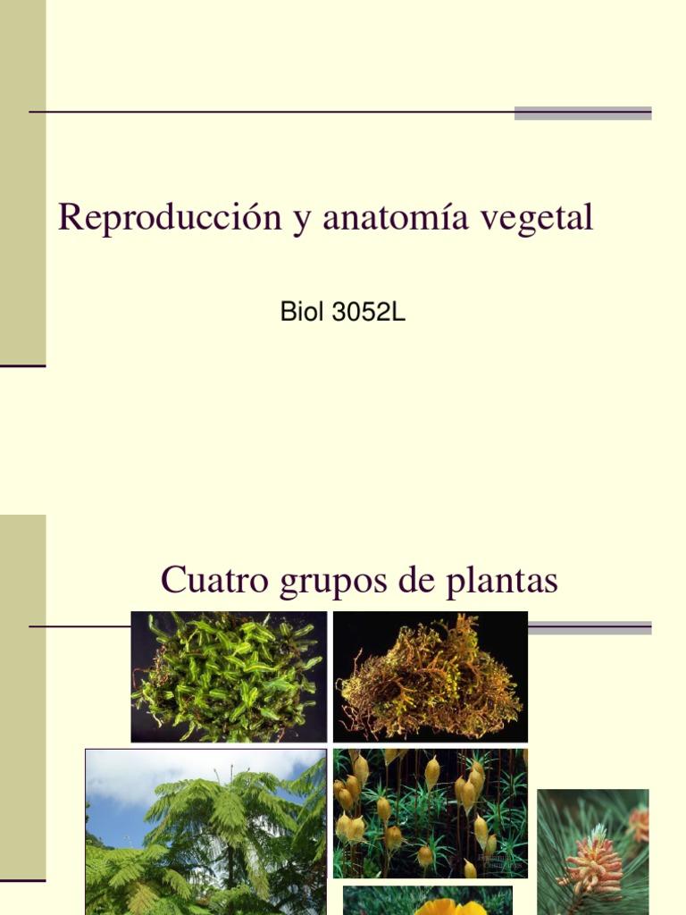 Reproducción y anatomía vegetal