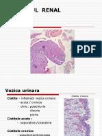 APARAT  RENAL- vezica  urinara+ aparat  genital   masculin