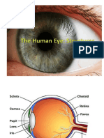 The Human Eye PowerPoint