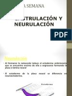 1. Embrio Primera Neurulacion