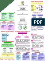 286653237-Triptico-Sistema-Nervioso-Autonomo.pdf