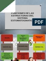 Funciones de Las Estructuras Del Sistema Estomatognatico