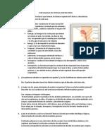 ESPECIALIDAD DEL SISTEMA respiratorio.docx