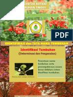 Identifikasi Dan Tata Nama Tumbuhan.pptx