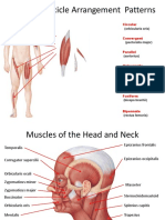 Muscles of Human Anatomy Test Prep