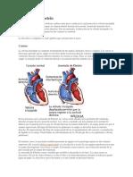 exposicion cardiopatia congenita