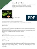 Plantas Medicinales de la Selva.docx