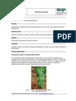 Stevicultura (Stevia Rebaudiana Bert) Bertoni