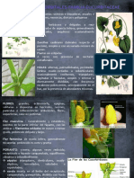 Orden Cucurbitales-familia Cucurbitaceae