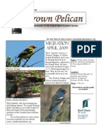 May-June 2009 Brown Pelican Newsletter Coastal Bend Audubon Society
