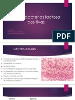 Enterobacterias Lactosa Positivas(1)