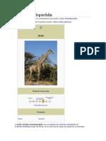 Giraffa Camelopardalis
