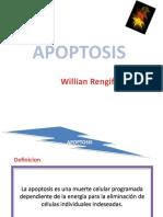 Apoptosis Ppt