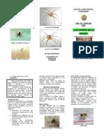 Triptico Arañas Del Hogar