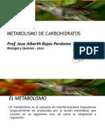 2.3 Metabolismo de Carbohidratos
